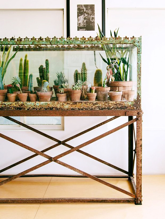 cacti display / sfgirlbybay