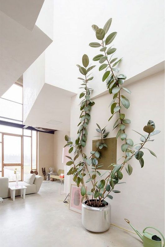 tall indoor plant in silver pot via apartment therapy / sfgirlbybay