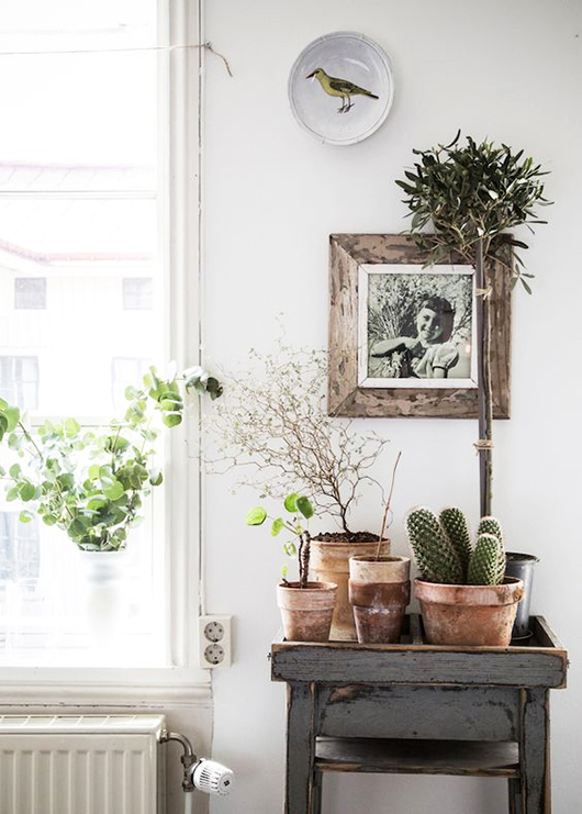 green potted plants and cacti via elle decoration. / sfgirlbybay