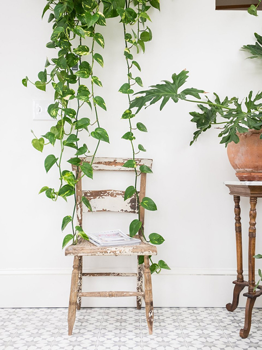 green potted and hanging plants in dining room. / sfgirlbybay