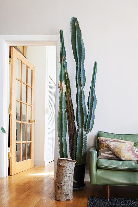oversized potted cacti in living room. / sfgirlbybay