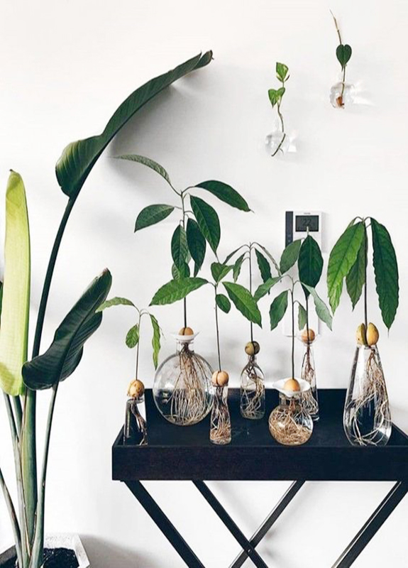 propagating plants and growing indoor gardens / sfgirlbybay